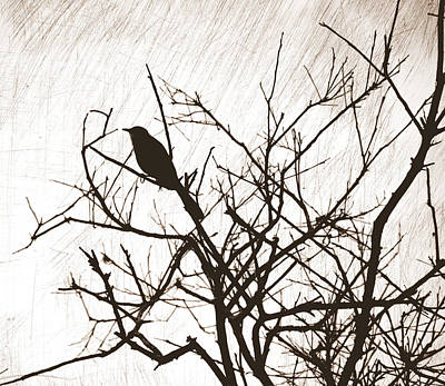 Photograph - Mockingbird Silhouette by Linda Rae Cuthbertson