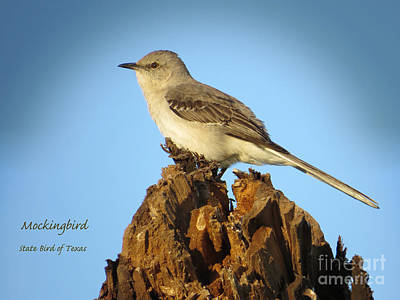 Mockingbird Digital Art - Mockingbird - State Bird Of Texas by Ella Kaye Dickey