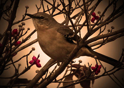 Mockingbird With Berries Original by Patricia McAtee