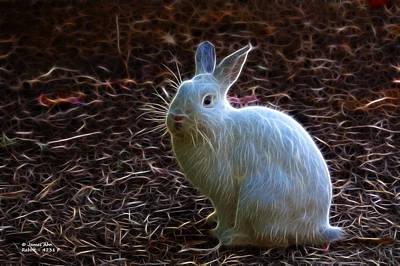 Photograph - Modern Fractal Rabbit Art By James Ahn 4231 by James Ahn