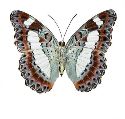 Moduza Nuydai Art Print by Natural History Museum, London