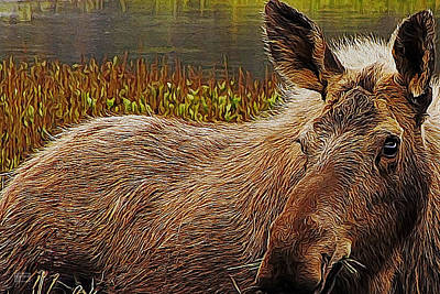Digital Art - Moistly Moose by Jim Pavelle