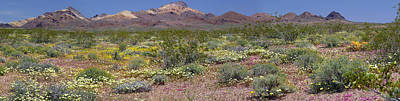 Photograph - Mojave Desert Floral Display by Jennifer Nelson