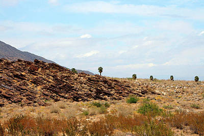 Photograph - Mojave Desert Landscape by Ben and Raisa Gertsberg