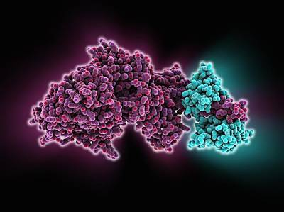 Motor Protein Photograph - Molecular Motor Protein by Science Photo Library