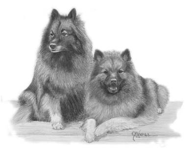 Drawing - Molly And Talli by Joe Olivares