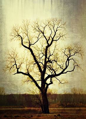 Molted Tree Art Print by Marty Koch