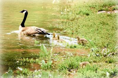 Photograph - Mom And Babies Swimming by Peggy Franz