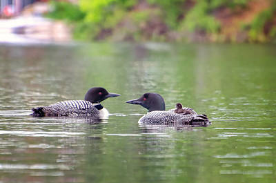 Mom And Dad Loon With Baby On Back Art Print