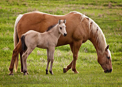 Horse Photograph - Mom And Foal 2 by Donna Doherty