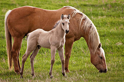 Barnyard Photograph - Mom And Foal by Donna Doherty