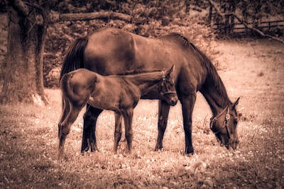 Mom And Foal Art Print by Mary Timman