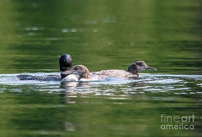 Photograph - Mom And Kids by Cheryl Baxter