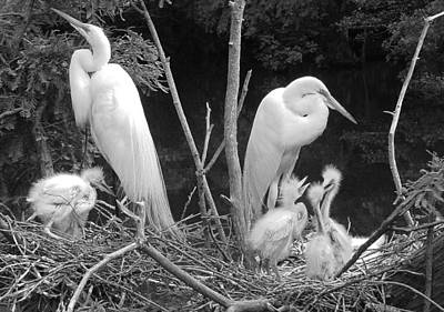 Mom And Pop And Chicks In Black And White Art Print