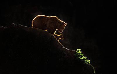 Backlighting Wall Art - Photograph - Mom Bear With Cub by Xavier Ortega
