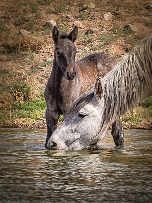 Wild Horses Photograph - Mom Needs A Drink by Janis Knight