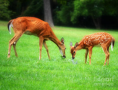 Autumn Peggy Franz Photograph - Mom Sharing A Snack With Her Baby Fawn by Peggy Franz