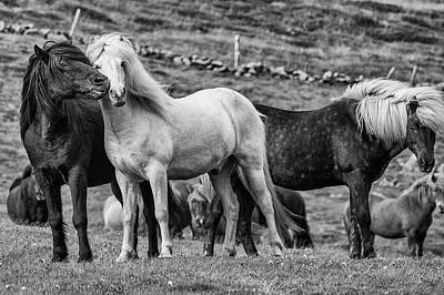 Iceland Horse Wall Art - Photograph - Moment by Bragi Ingibergsson -