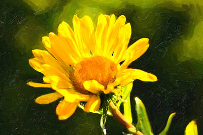 Photograph - Moment In The Sun - Golden Flower - Northern California by Mark E Tisdale