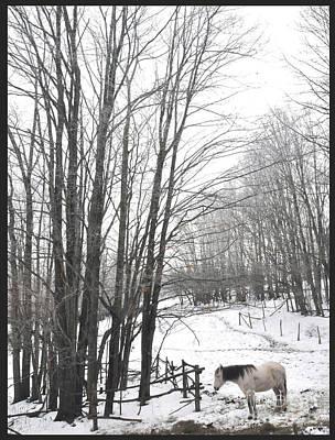 Paso Fino Horse Photograph - Momento De Preciosa by Patricia Keller
