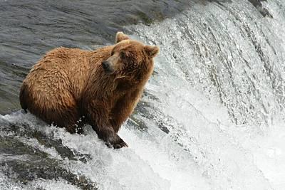 Bear Photograph - Momma Bear At The Falls by Patricia Twardzik