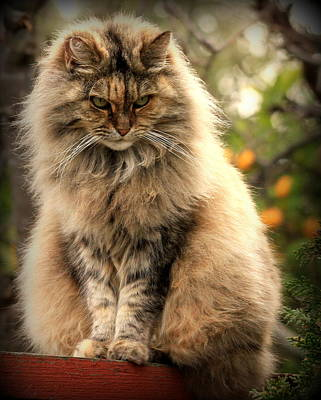 Photograph - Momma Kitty by Michael Curry