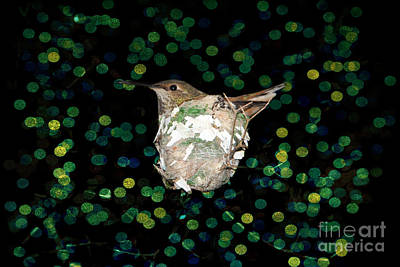 Digitalized Photograph - Mommy Hummingbird In The Nest by Mariola Bitner