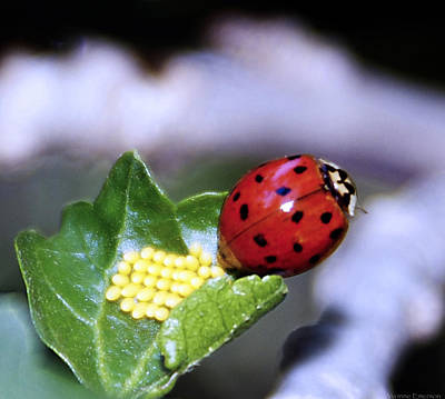 Art Print featuring the photograph Mommy Ladybug by Yvonne Emerson AKA RavenSoul