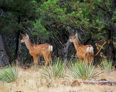 Mule Deer Fawn Digital Art - Mommy Where Are You by Ernie Echols