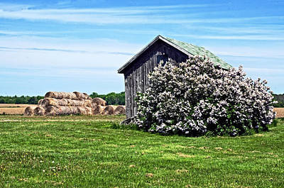 Moms Lilac Barn Art Print by Cheryl Cencich