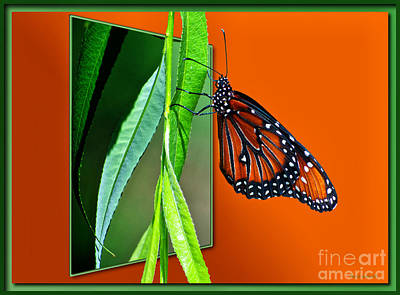 Monarch Butterfly 01 Art Print by Thomas Woolworth