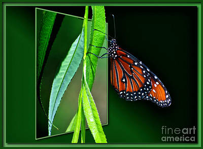 Monarch Butterfly 04 Print by Thomas Woolworth