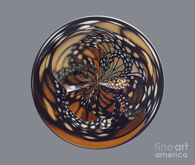 Monarch Butterfly Abstract Print by Darleen Stry