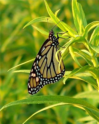 Faith Hope And Love Painting - Monarch Butterfly At Sunset by James Preston