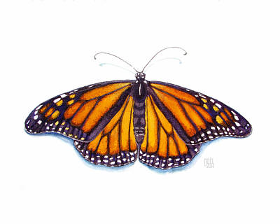 Monarch Butterfly Art Print by Catherine Noel