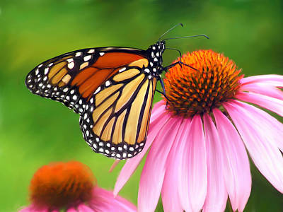 Monarch Butterfly Print by Christina Rollo