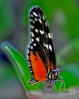 Photograph - Monarch Butterfly by Dawn Gari