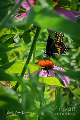 Photograph - Monarch Butterfly Deep In The Jungle by David Perry Lawrence