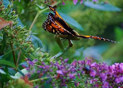 Monarch Butterfly Down Art Print by Joy Bradley