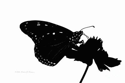 Photograph - Monarch Butterfly In Silhouette by Richard J Thompson