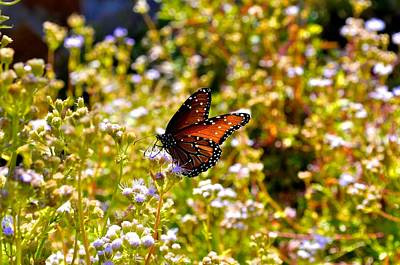 Photograph - Monarch Butterfly In The Fall by Kristina Deane