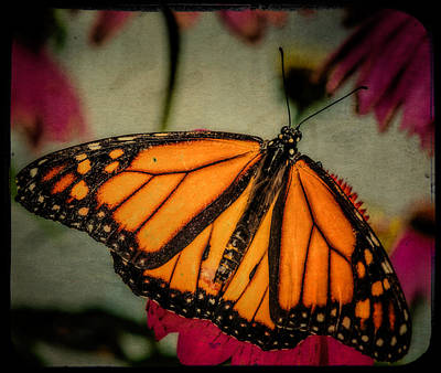 Art Print featuring the photograph Monarch Butterfly by Linda Karlin