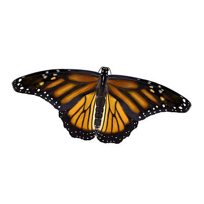 Digital Art - Monarch Butterfly by Nigel Follett