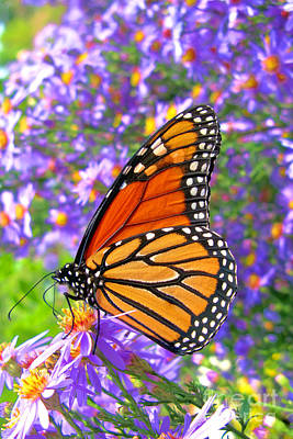 Photograph - Monarch Butterfly by Olivier Le Queinec