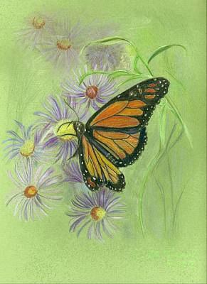 Daisy Drawing - Monarch Butterfly by Ruth Seal