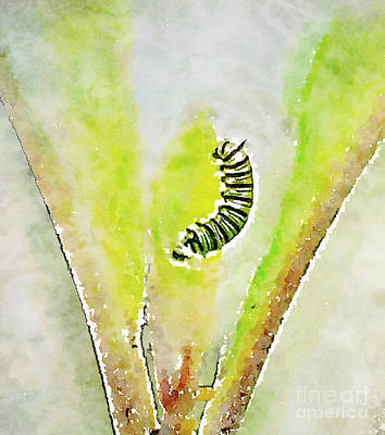 Photograph - Monarch Caterpillar - Digital Watercolor by Kerri Farley