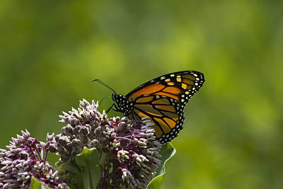 Sports Royalty-Free and Rights-Managed Images - Monarch  by David Tennis
