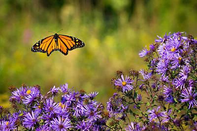 Photograph - Monarch Flight by Bill Pevlor
