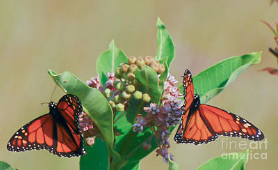 Art Print featuring the photograph Monarch Gathering by Kerri Farley