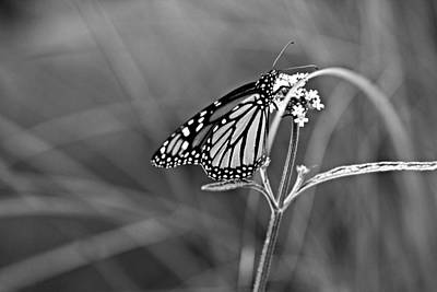 Photograph - Monarch In Monochrome by Jp Grace